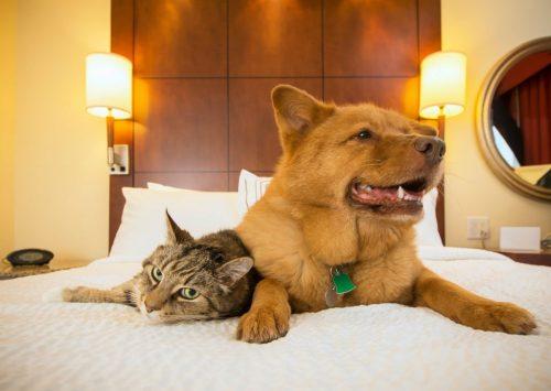 Como tornar seu hotel em uma experiência pet friendly